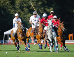 NSCF Night @ Newport Polo  August 4th